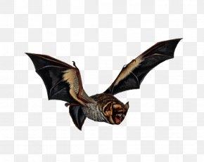 Bat - Vampire Bat Bird Art PNG