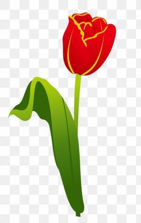 Tulip Flower - Garden Tool Gardening Landscaping PNG