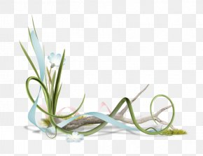Lily Of The Valley - Lily Of The Valley Photography Image Labour Day Clip Art PNG