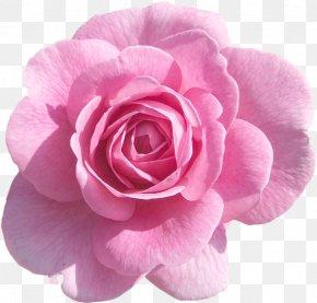 Perennial Plant Artificial Flower - Pink Flower Cartoon PNG