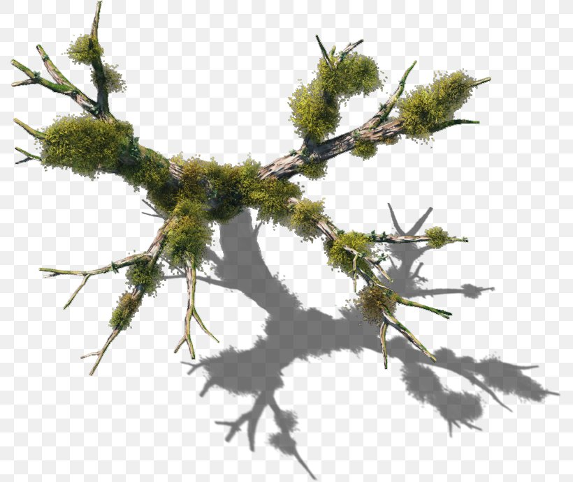 Tree Plant Vine Twig Branch, PNG, 789x691px, Tree, Bark, Branch, Cupressus, Cypress Family Download Free
