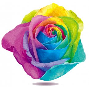 Rose - Rainbow Rose Flower Stock Photography Clip Art PNG