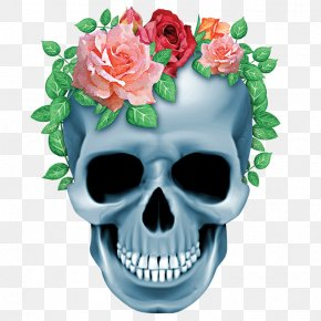 Skull - Human Skull Symbolism Human Skeleton Bone PNG