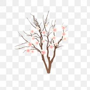 Peach Blossom - Peach Drawing Cartoon PNG