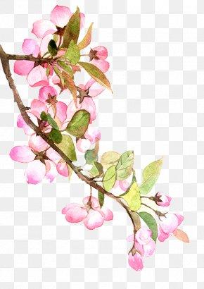 American Begonia Society PNG