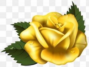 Large Yellow Rose Transparent Clip Art Image - Rose Yellow Clip Art PNG