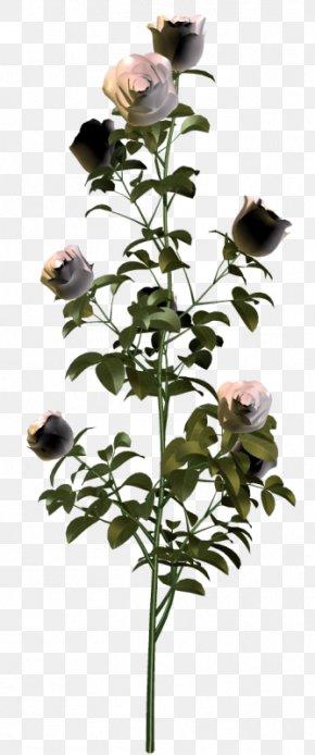 Garden Roses Plants Flower Clip Art PNG