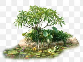 Creative Garden Trees - Tree Flowerpot Houseplant PNG