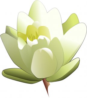 Cartoon Lily Flower - Easter Lily Tiger Lily Flower Clip Art PNG