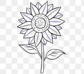 Sunflower Leaf - Drawing Common Sunflower Art Sketch PNG