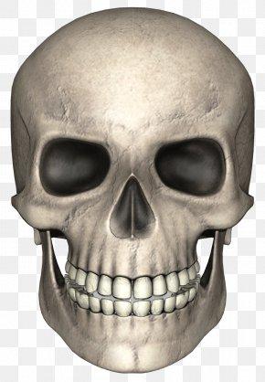 Skull - Skull Pixabay PNG