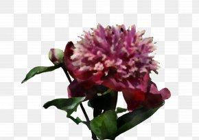 Red Clover Petal - Flower Plant Cut Flowers Pink Petal PNG