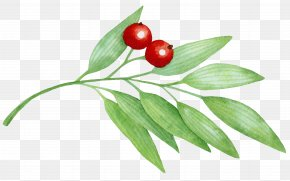 Cherry - Cherry Berry Icon PNG