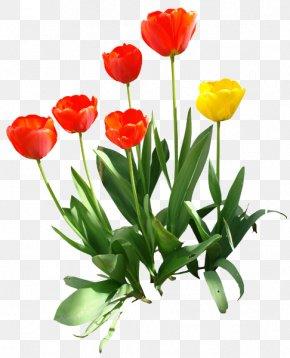 Tulip Transparent Image - Indira Gandhi Memorial Tulip Garden Clip Art PNG