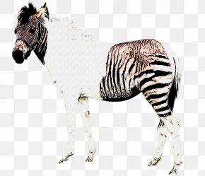 Zebra - Quagga Okapi Mane Zebra Mustang PNG