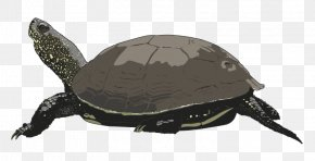 Sea Turtles Cliparts - Sea Turtle Free Content Clip Art PNG