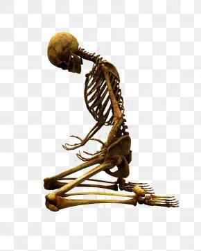 Bones - Skeleton Bone Clip Art PNG