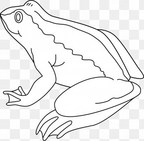 Frog Line Cliparts - Frog Amphibian Black And White Drawing Clip Art PNG