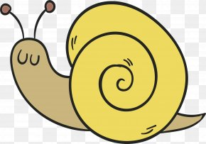 Sea Snail Snails And Slugs - Snail Cartoon PNG