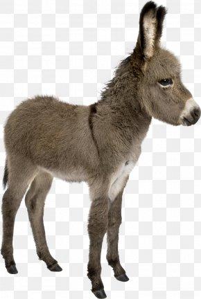 Donkey - Irish Donkey Provence Donkey Foal Stock Photography PNG