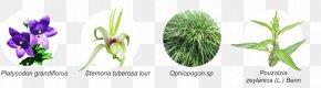 Leaf - Cut Flowers Grasses Plant Stem Leaf Herb PNG