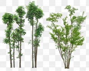 Tree - Tree Plant Landscape PNG