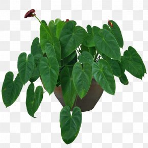 Indoor Plant Potted Plants - Houseplant Flowerpot Vase PNG