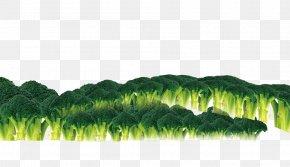 Broccoli - Broccoli Food Icon PNG