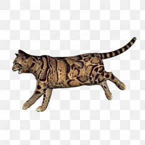 Leopard - California Spangled Bengal Cat Ocicat Leopard Wildcat PNG