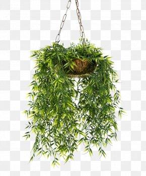 Vine - Flowerpot Houseplant Garden PNG