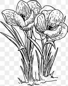 Outline Of Flowers - Flower Autumn Crocus Clip Art PNG