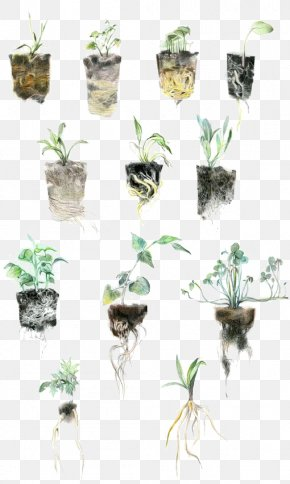 Plant - Illustrator Watercolor Painting Art Center College Of Design Illustration PNG