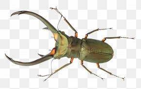 Bug - Beetle Copying PNG
