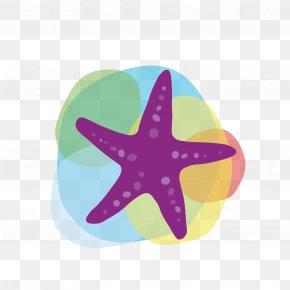Vector Starfish - Tourism Euclidean Vector Icon PNG