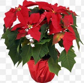 Flower Pot - Poinsettia Houseplant Flower Christmas Plants PNG