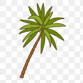 Cocanut Border - Coconut Asian Palmyra Palm Tree Green PNG