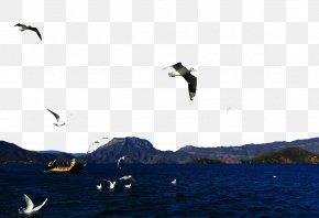 Beautiful Views Of The Lake - Lugu Lake Slender West Lake Namtso Daming Lake Deer Lake PNG