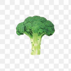 Fresh Green Broccoli - Organic Food Vegetable Broccoli PNG