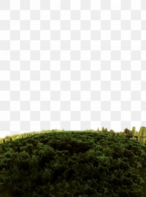 Deep Forest Top View - Download Silhouette PNG