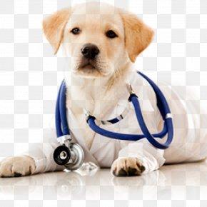 Dog - Dog Cat Veterinarian Pet Health Care PNG