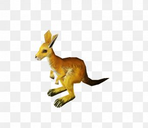 Kangaroo - Kangaroo Macropodidae Red Fox Tail Animal PNG