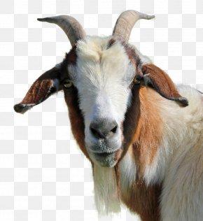 Goat - Feral Goat Livestock PNG