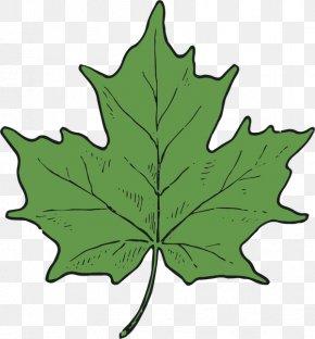 Sunflower Leaf - Maple Leaf Tree Plant Stem PNG