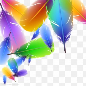 Feather - Feather Color Euclidean Vector Illustration PNG