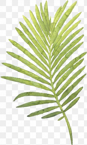 Painting - Palm Trees Watercolor Painting Leaf PNG