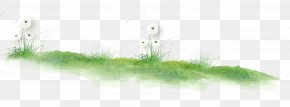 Dandelion On The Lawn - Grasses Plant Stem Green Pattern PNG
