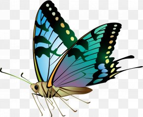 Monarch Butterfly Free - Monarch Butterfly Insect Pieridae Euclidean Vector PNG