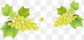 Bunch Of Grapes - Grappa Common Grape Vine Barrel PNG