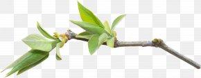 Leaf - Grasses Plant Stem Leaf Flower Branching PNG