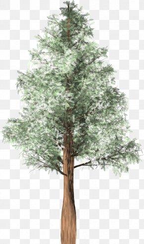 Tree - Tree Cedar Austrocedrus Spruce Woody Plant PNG